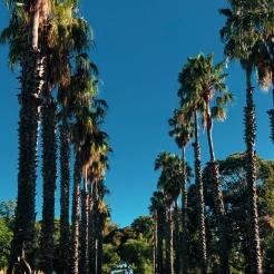 Melbourne - gardens