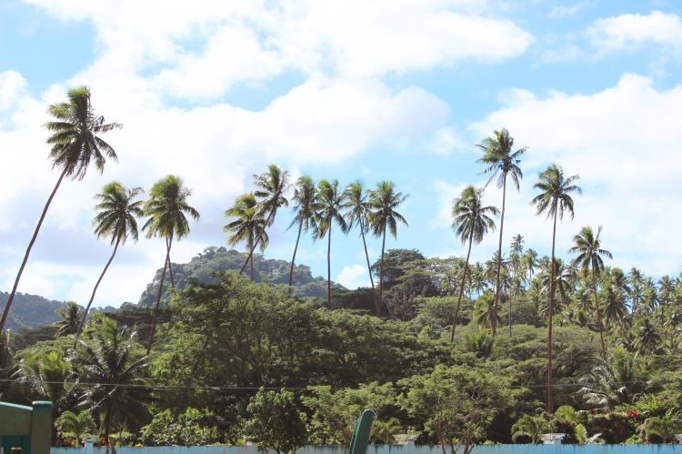 Fiji - palms