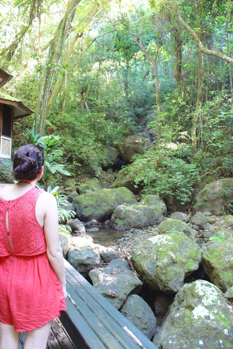 Fiji - rainforest